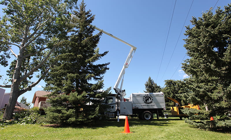 Aerial truck trimming trees