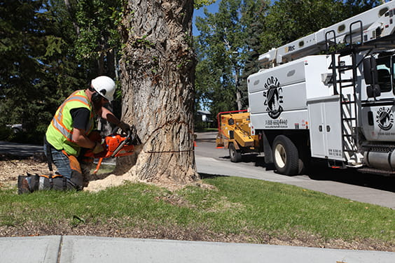 Tree removal and tree trimming services