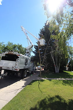 Tree trimming from bucket truck