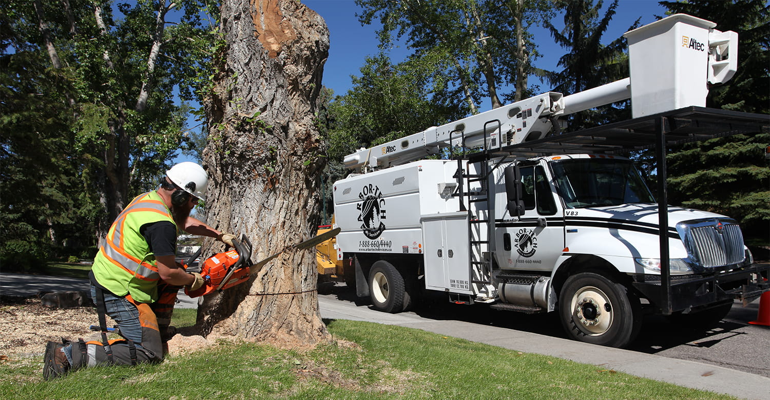 Arborist Specialists removing a large tree